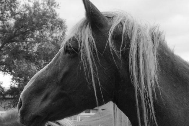 Перед тем как пойти на ограбление преступники снчала воровали лошадь и телегу, если предполагалось, что добычи будет много.
