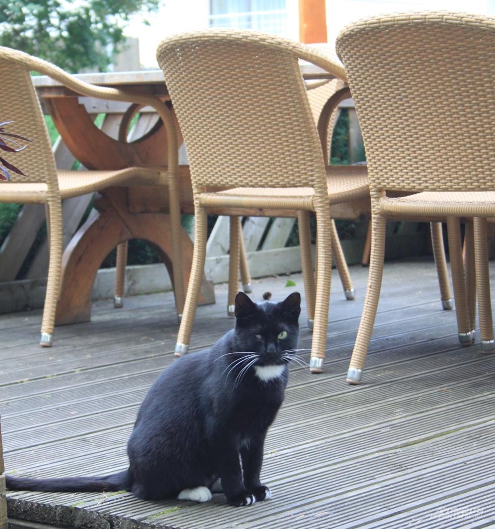 Кот возле ресторана Lido совсем даже не пустующего