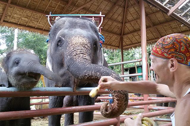 В Таиланде экзотических животных можно не только увидеть, но и покормить