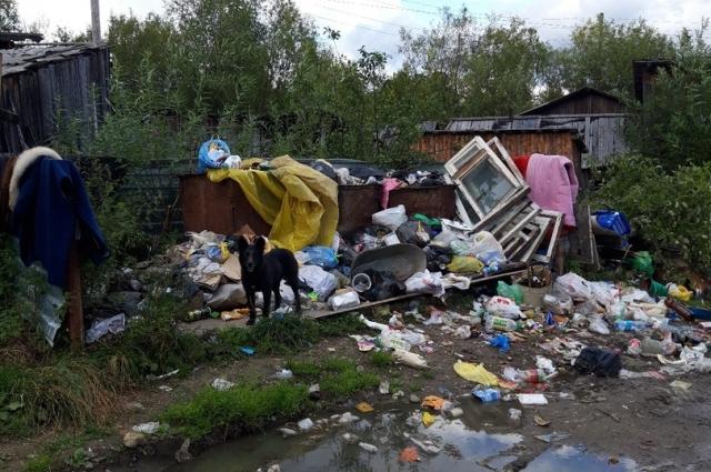 Медведь оставил перевёрнутые мусорные контейнеры.