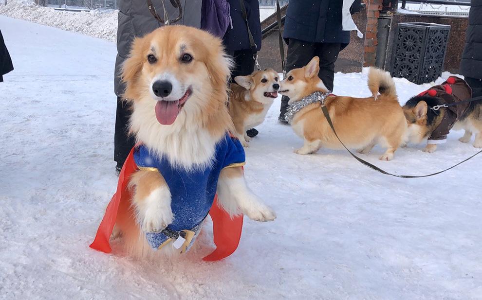 В параде участвовали более 20 собак.