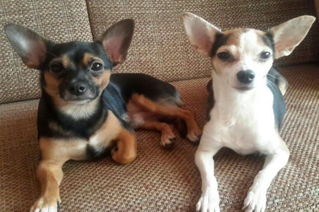 Сэм (слева) и Софа (справа)