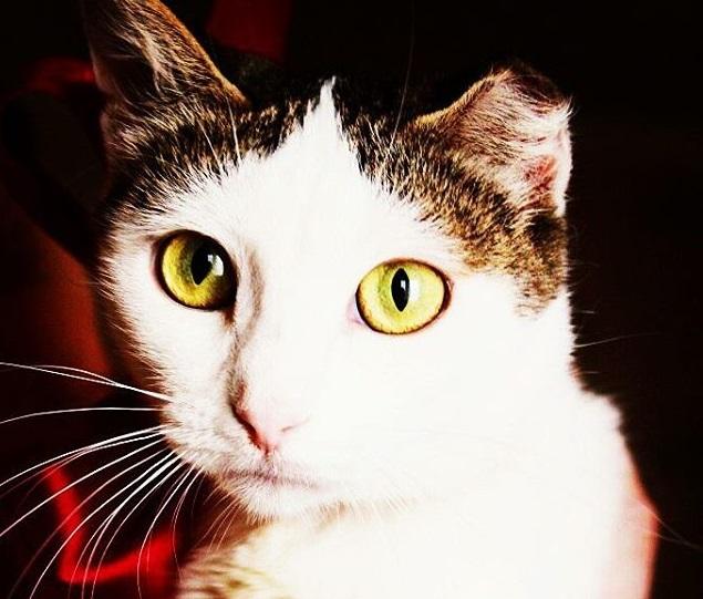 Кошка Маргоша ждет хозяина!