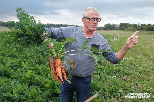 Морковь уродилась!