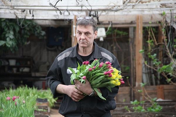 Сейчас созревающие тюльпаны ещё с еле проступающими бутонами активно срезают, упаковывают и складывают в прохладное тёмное место.