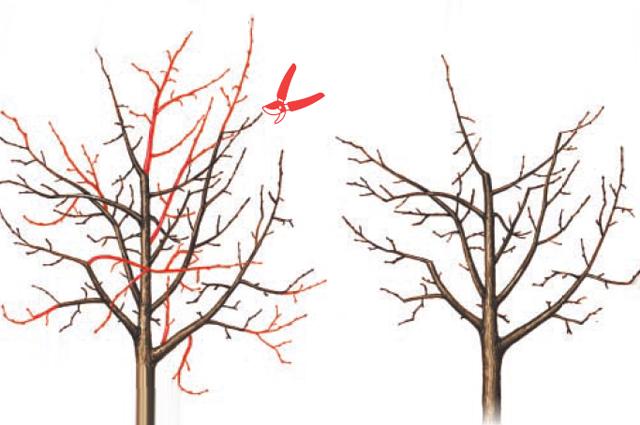 Красным цветом показаны загущающие ветки.