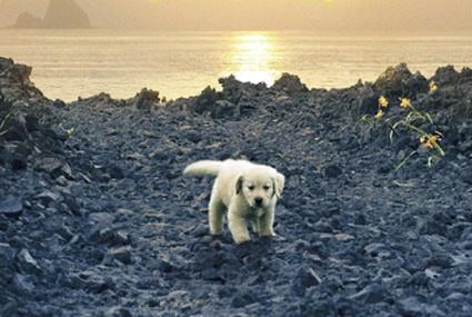 «Рокку: Остров моей собаки».