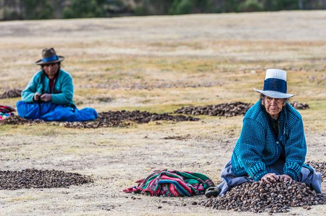 Картофель в современном Перу