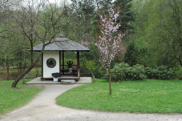 Цветение сакуры в Японском саду в Главном ботаническом саду