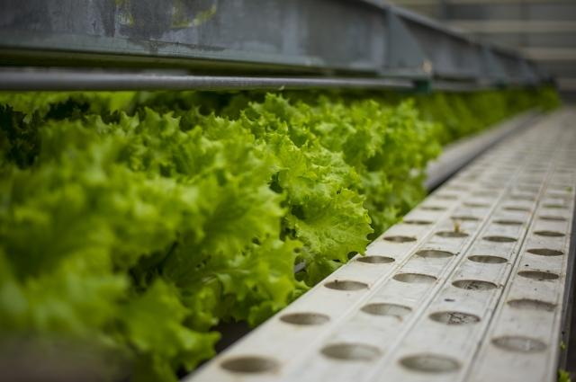 Зелень можно хранить в холодильнике всю зиму.