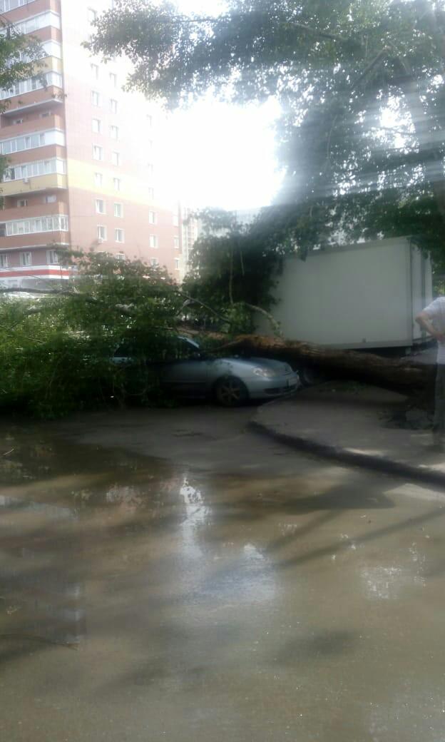 Деревья помяли машины.