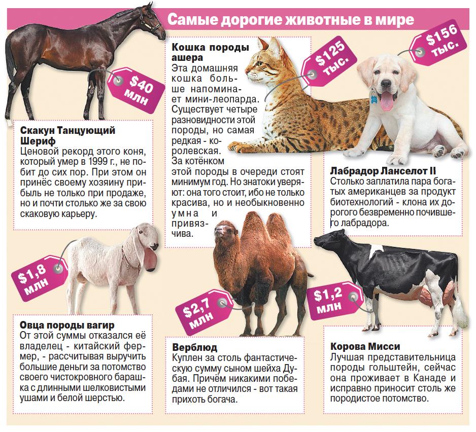 Самые дорогие животные в мире. Инфографика