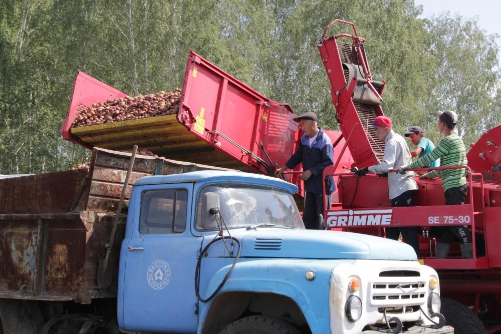 Первая овощная продукция нынешнего года от томинского фермера Валерия Новосельцева уже 1 сентября будет в обеденных меню детского сада и школы.