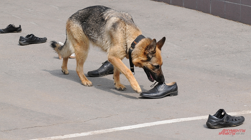 Собаки тоже покажут высокий класс.