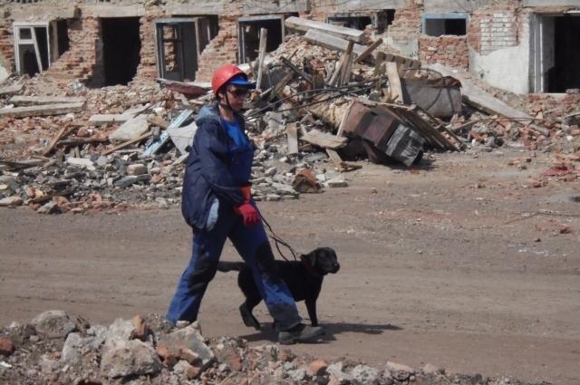 Собака не только выполняет поиск, но и может оказать эмоциональную поддержку.