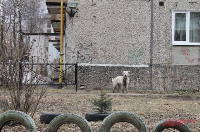 Собака, покусавшая женщину, пока бегает на свободе