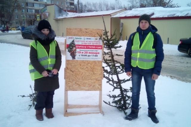 Прием деревьев ведут волонтеры Педуниверситета