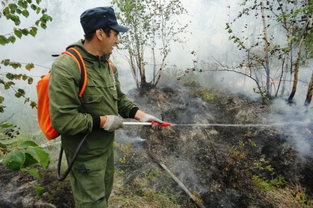 Cамый большой урон нашим лесам наносят пожары