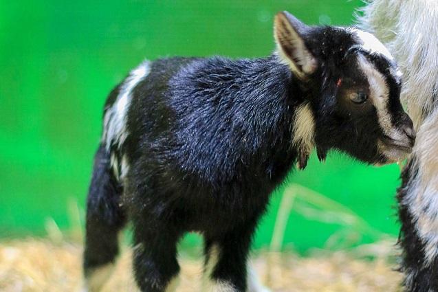 У самого юного обитателя Ручного зоопарка пока нет имени.