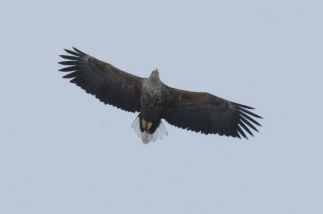 Как вы думаете, почему эту птицу называют Кляксой?