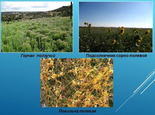 Опасные виды растений для сельскохозяйственных культур.