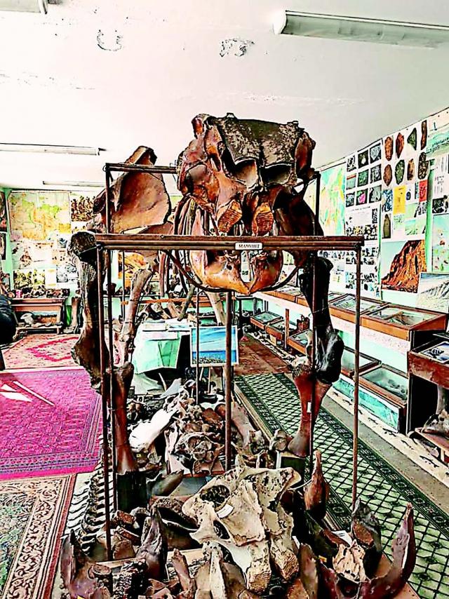 Мамонта в музее Тикси собрали по косточкам.