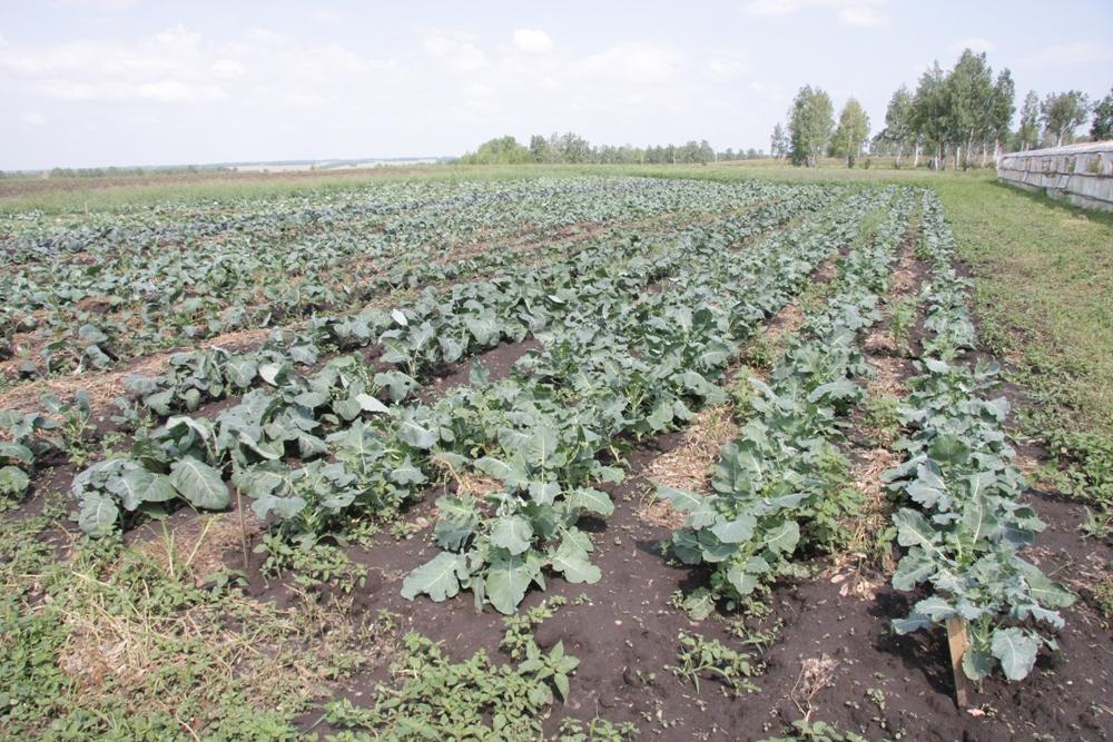 Новые формы сотрудничества помогут в снабжении социальной сферы качественными овощами и другими продуктами, а местным фермерам и предпринимателям можно задуматься о расширении производства.
