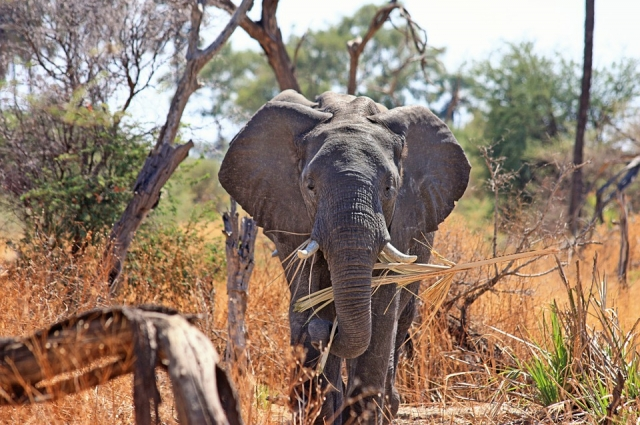 Через веб-камеру в Южной Африке можно увидеть слонов, львов, леопардов и носорогов.