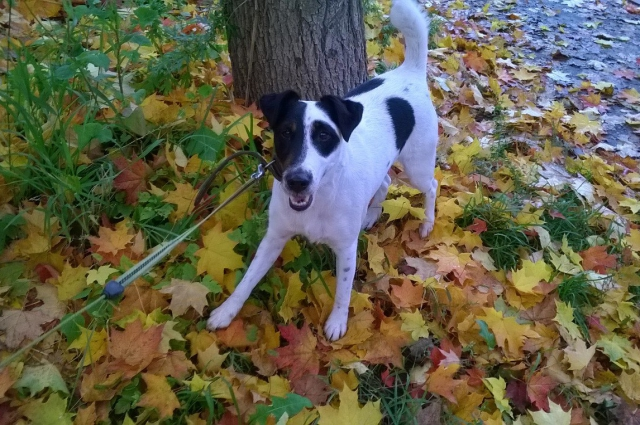 Дружелюбный, игривый пес привлек внимание компании.