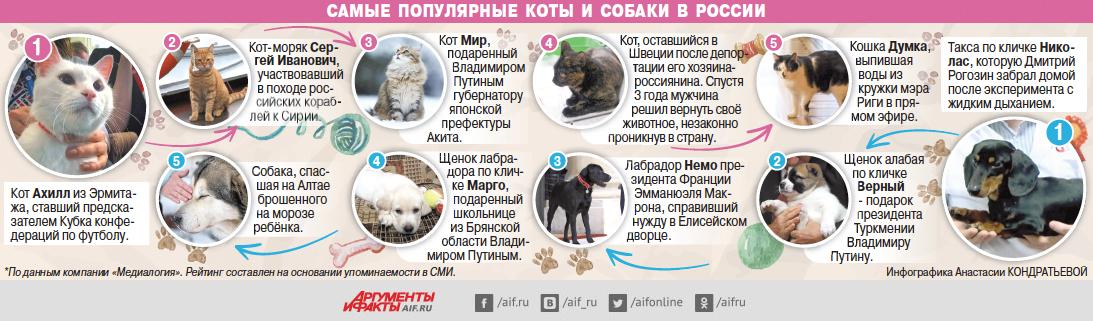 Самые популярные коты и собаки в России