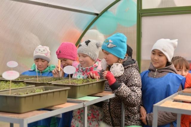 В школьной теплице ребята выращивают цветы, травы и овощи.
