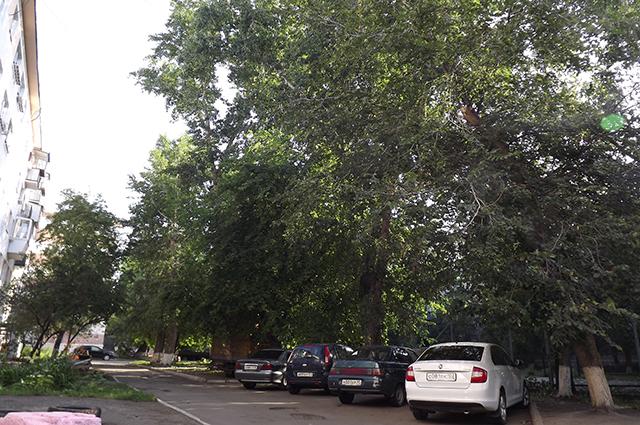 При сильном ветре огромные деревья грозят рухнуть на соседние дома и машины.