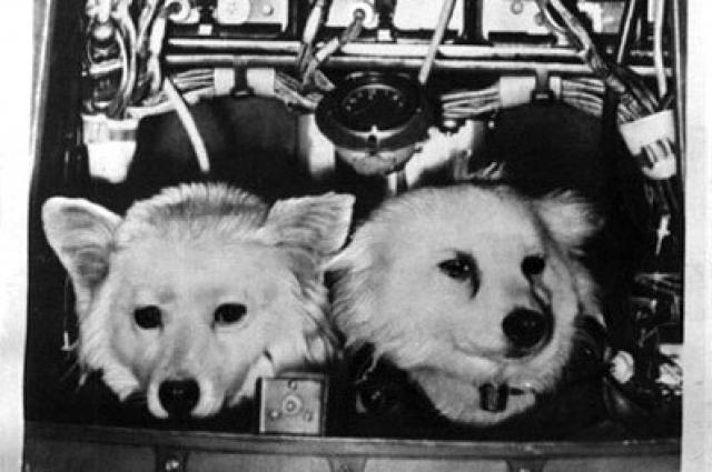 Погибшие на 19 секунде полета Дезик и Лиса.