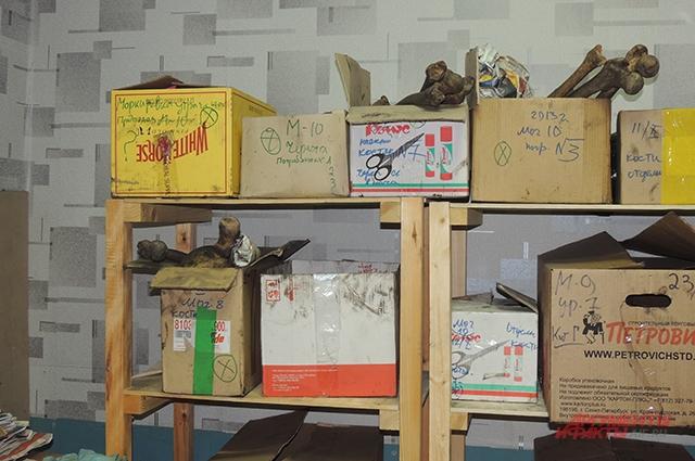 Останки лежат в картонных коробках в помещении музея