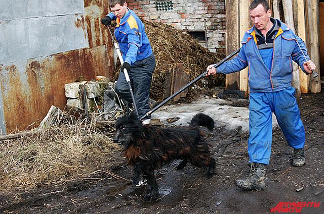 В Госдуме в ближайшее время должно пройти очередное слушание законопроекта «Об ответственном обращении с животными».