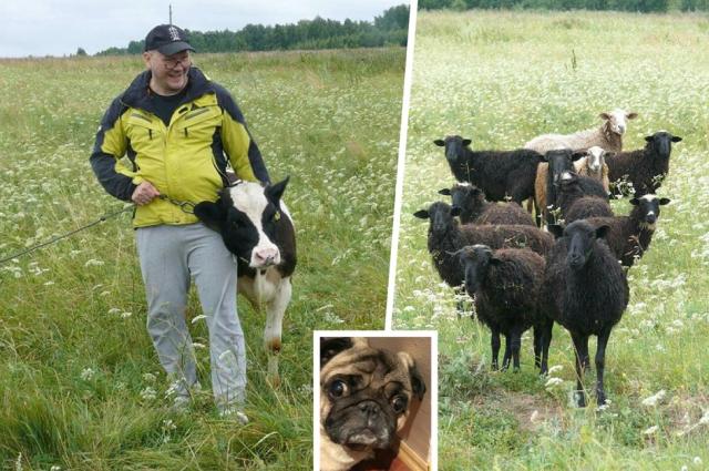 За городом у Константина Захарова овцы и коровы, а в городской квартире - пес Гарик.