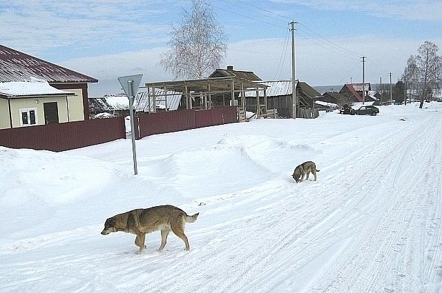 По деревенским улицам лениво бегают собаки.