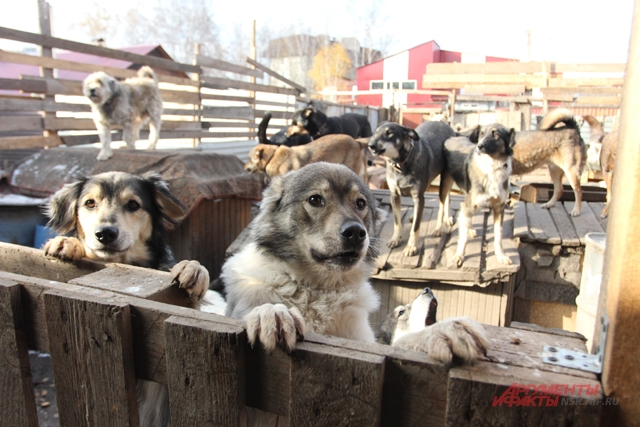 Бродящих собак стало больше?