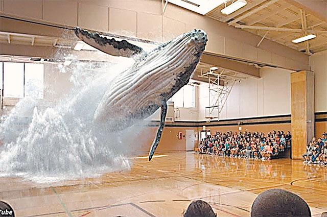 В таком зоопарке людей пугает голографический кит.