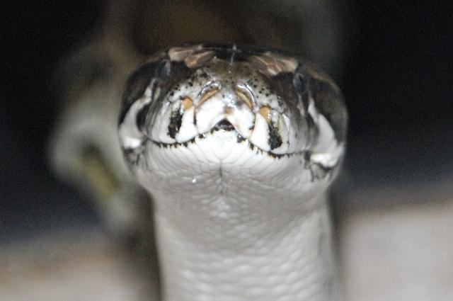 Омичи больше не смогут взять змею на руки.