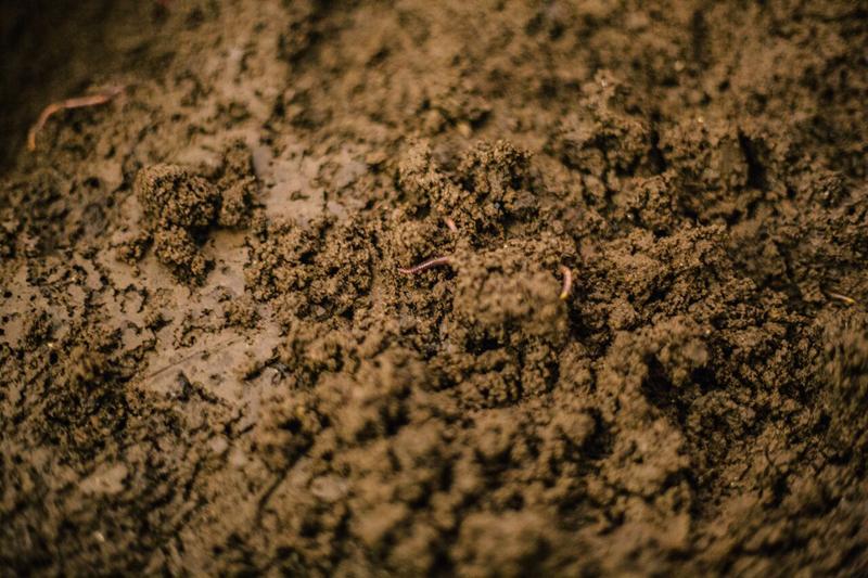 Черви едят органические отходы, производят биогумус и наслаждаются жизнью.