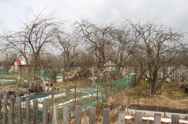 Этот сад спас в войну сотни жизней.