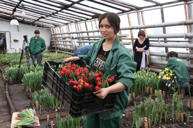 По традиции, самым весенним цветком считается тюльпан!