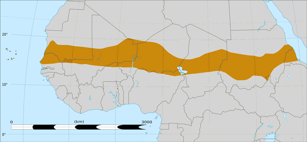 На карте Африки выделена зона тропических саванн (Сахель), отделяющих пустыню, лежащую к северу, от более плодородных и влажных регионов, лежащих к югу. «Великая зелёная стена» должна пройти по северной части Сахеля.
