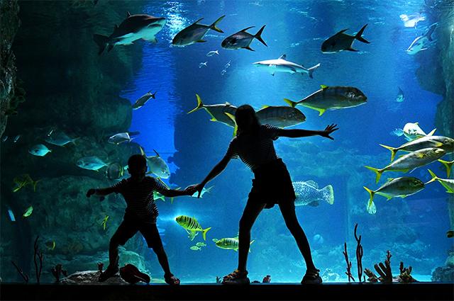 Ночь музеев» под водой: спят ли рыбы и светятся ли кораллы?