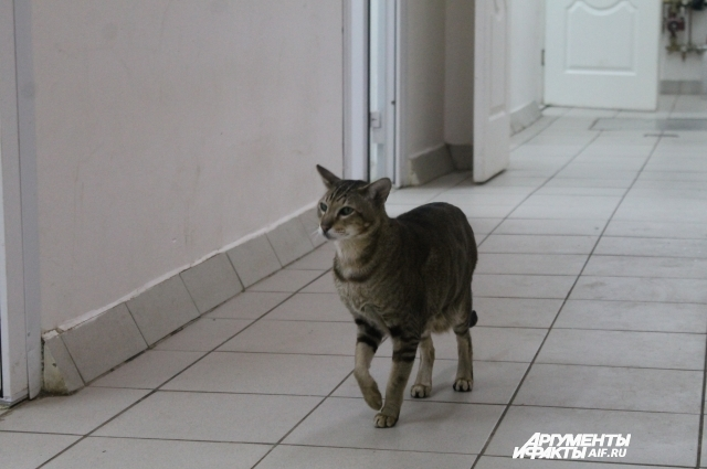 В виварии живёт кот, но он не для опытов, а для охраны от не лабораторных мышей.