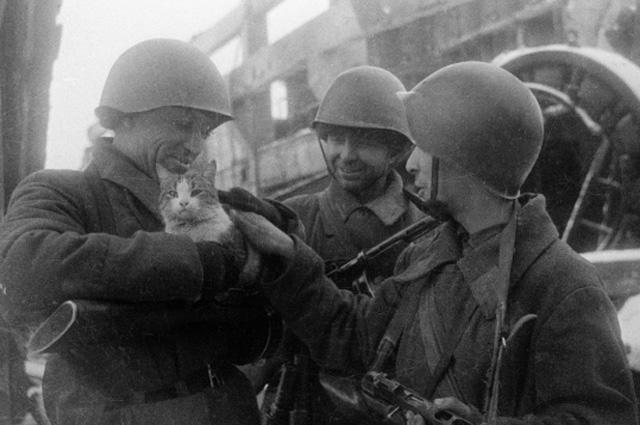 Командир 13-й Гвардейской дивизии Александр Родимцев (в центре) с бойцами и кошкой. 1942 г., Сталинград