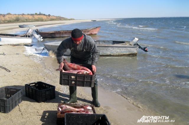 Пока рыба в Цимлянском водохранилище есть.