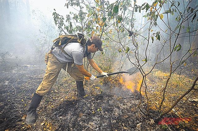 Это только рукописи не горят. А леса наши  - в огне.