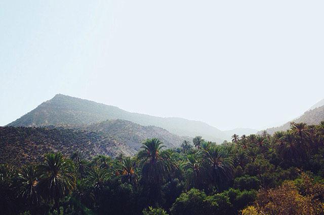 Кристина Пономарёва Пустынные пейзажи в Марокко сменяются зелёными прекрасными чащами.